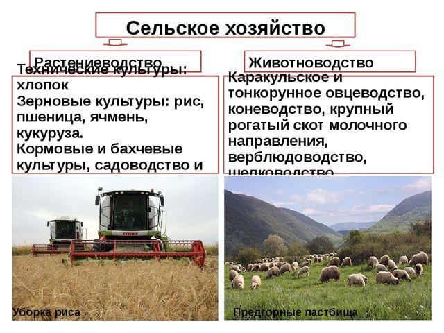 Сельское хозяйство Растениеводство Животноводство Каракульское и тонкорунное...