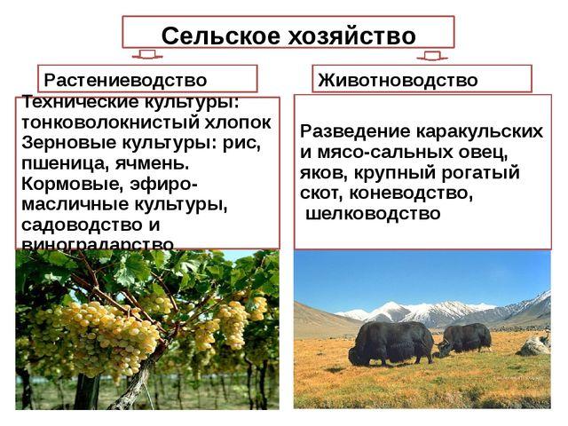 Сельское хозяйство Растениеводство Животноводство Разведение каракульских и м...