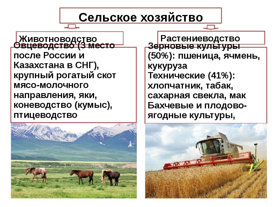 Сельское хозяйство Растениеводство Животноводство Зерновые культуры (50%): пш...