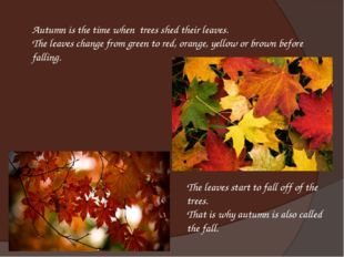 Autumn is the time when trees shed their leaves.  The leaves change from gree