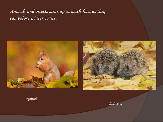 Animals and insects store up as much food as they can before winter comes. he...