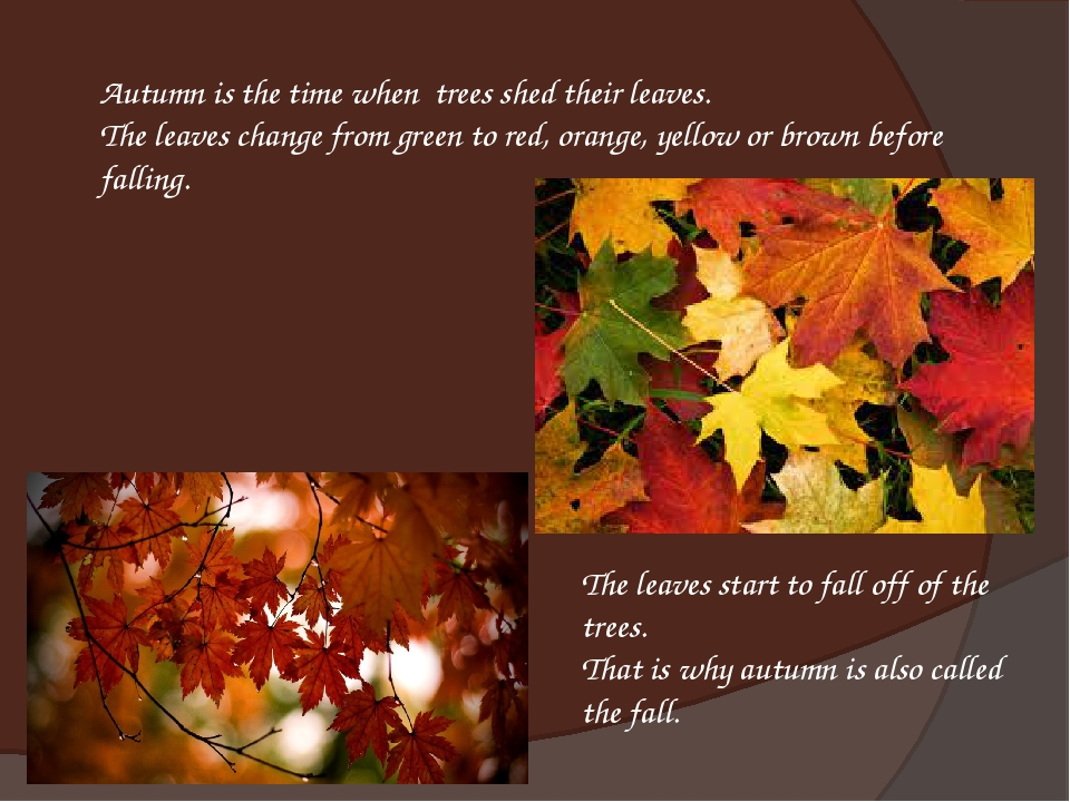 Autumn is the time when trees shed their leaves.  The leaves change from gree...