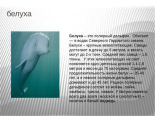 белуха Белуха – это полярный дельфин. Обитают — в водах Северного Ледовитого