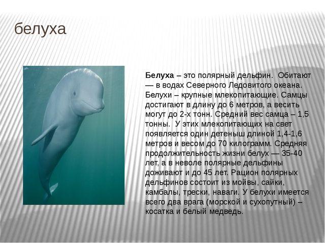 белуха Белуха – это полярный дельфин. Обитают — в водах Северного Ледовитого...
