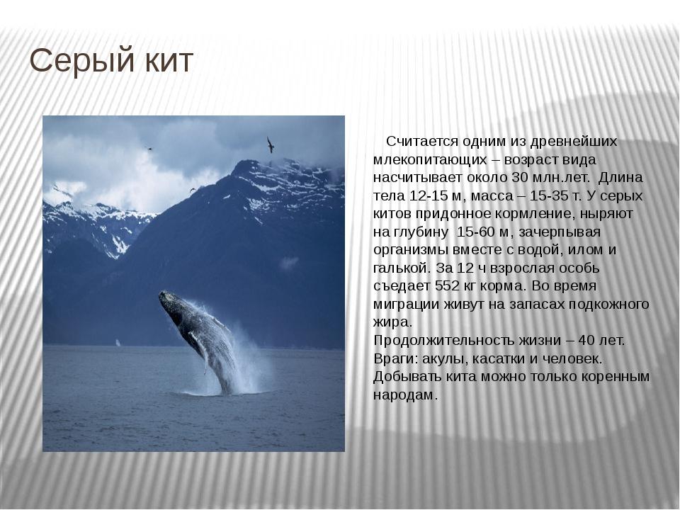 Серый кит Считается одним из древнейших млекопитающих – возраст вида насчитыв...