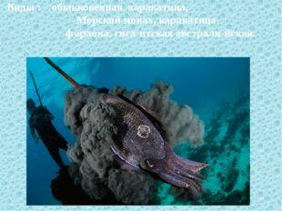 Виды : обыкновенная каракатица, Морской монах, каракатица фараона, гига́нтск