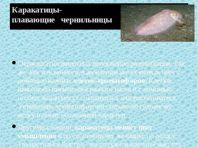 Каракатицы- плавающие чернильницы Окраска этих животных необычайно разнообраз...