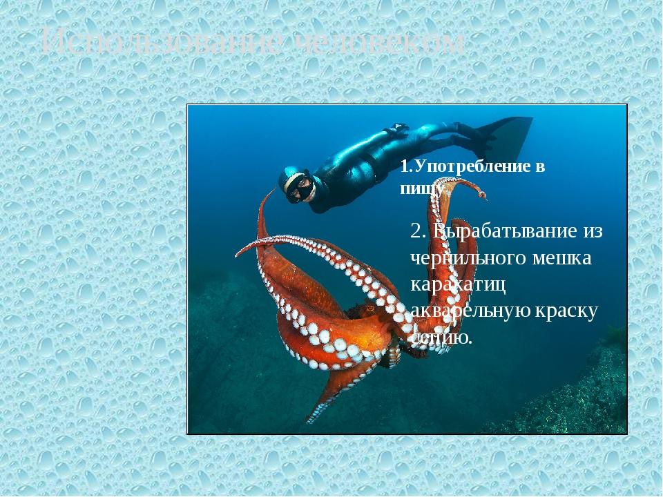 Использование человеком 2. Вырабатывание из чернильного мешка каракатиц аквар...
