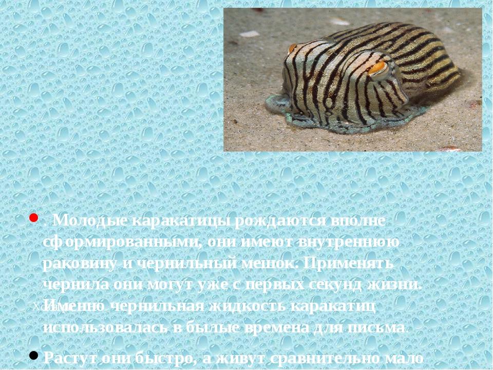 Хотя ра . Молодые каракатицы рождаются вполне сформированными, они имеют вну...
