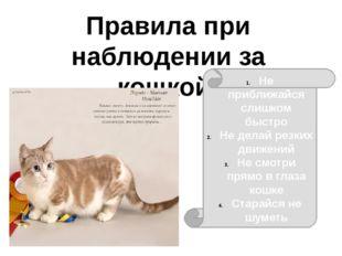 Правила при наблюдении за кошкой: Не приближайся слишком быстро Не делай резк