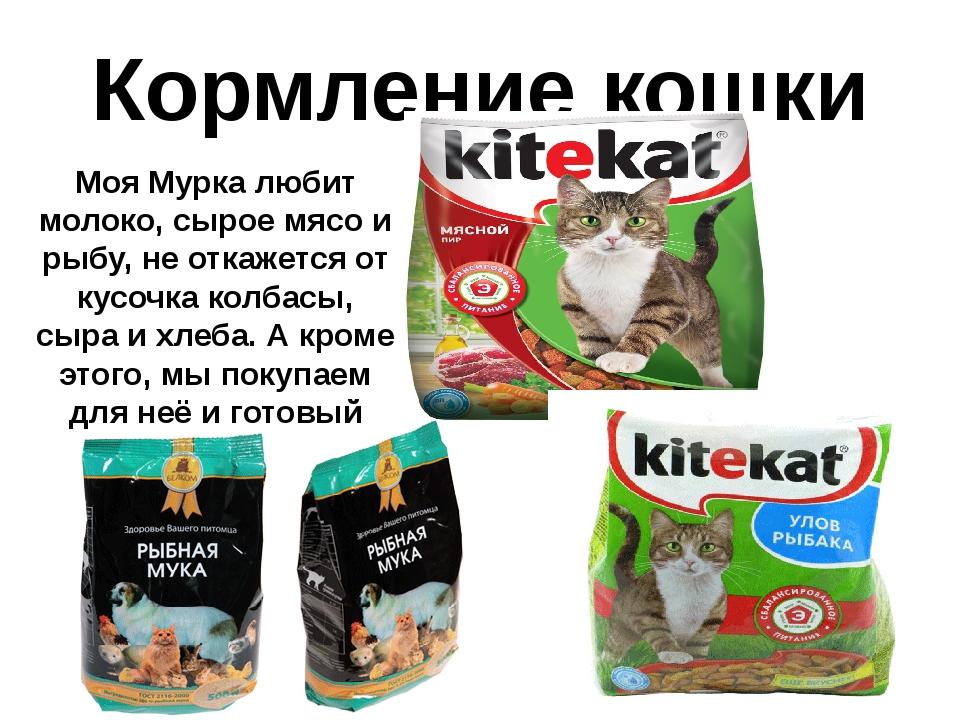 Кормление кошки Моя Мурка любит молоко, сырое мясо и рыбу, не откажется от ку...