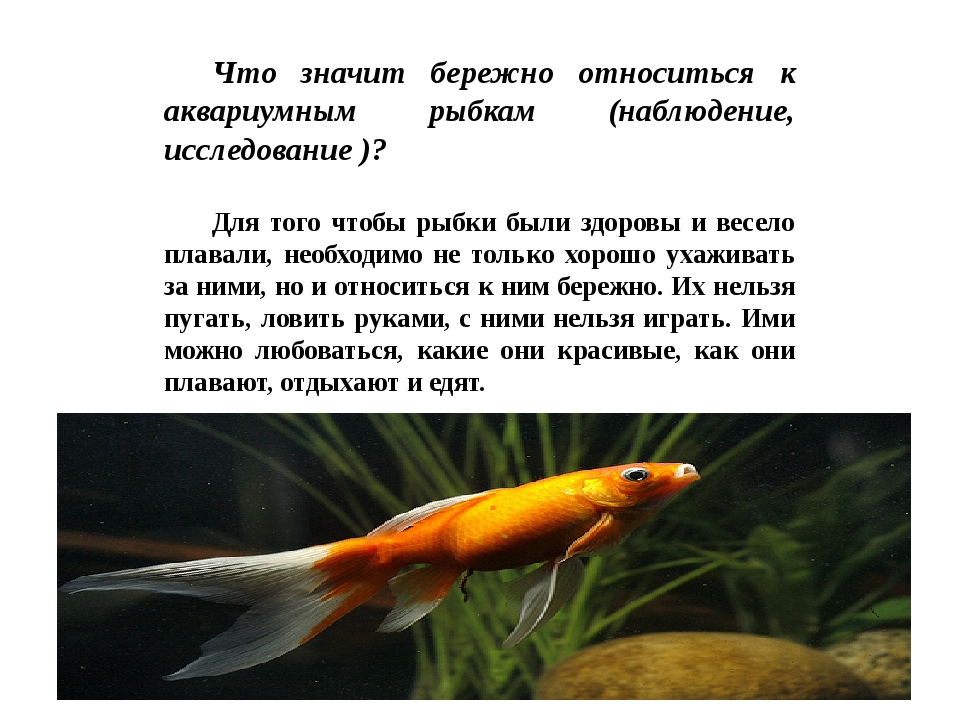 Что значит бережно относиться к аквариумным рыбкам (наблюдение, исследование...