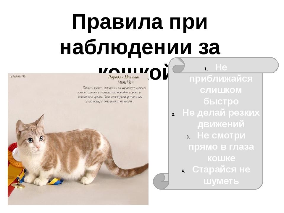 Правила при наблюдении за кошкой: Не приближайся слишком быстро Не делай резк...