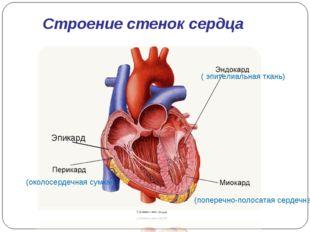 (околосердечная сумка) (поперечно-полосатая сердечная) ( эпителиальная ткань)