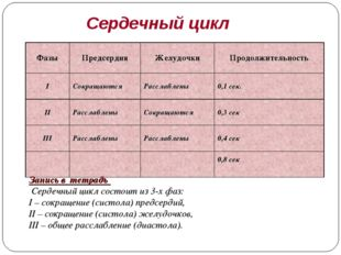 Сердечный цикл Запись в тетрадь Сердечный цикл состоит из 3-х фаз: I – сокращ