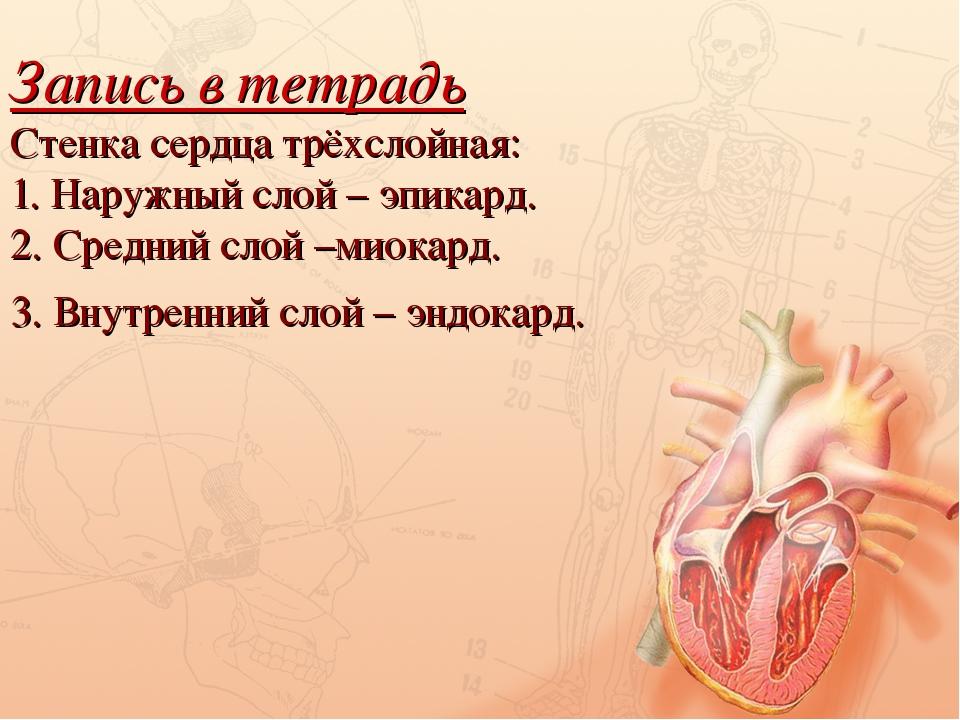 Запись в тетрадь Стенка сердца трёхслойная: 1. Наружный слой – эпикард. 2. Ср...