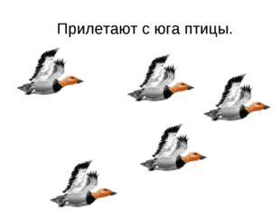 Прилетают с юга птицы.
