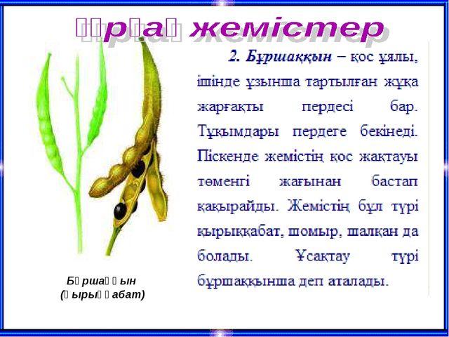 Бұршаққын (қырыққабат)
