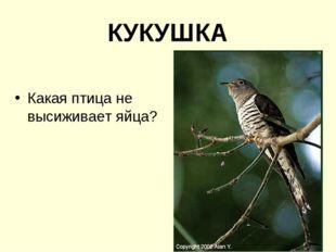 КУКУШКА Какая птица не высиживает яйца?