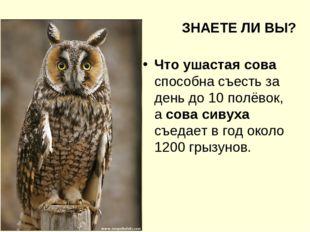 ЗНАЕТЕ ЛИ ВЫ? Что ушастая сова способна съесть за день до 10 полёвок, а сова