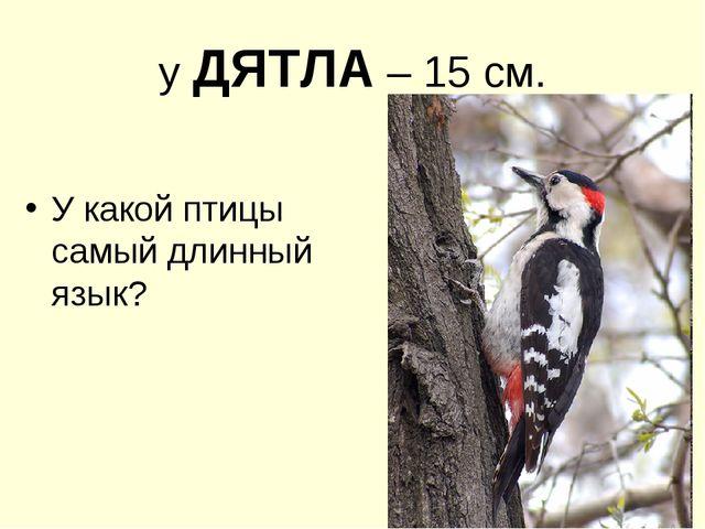 у ДЯТЛА – 15 см. У какой птицы самый длинный язык?