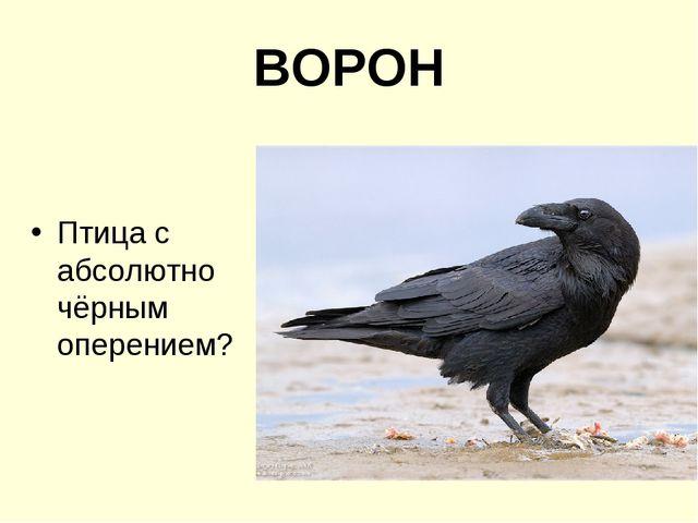 ВОРОН Птица с абсолютно чёрным оперением?