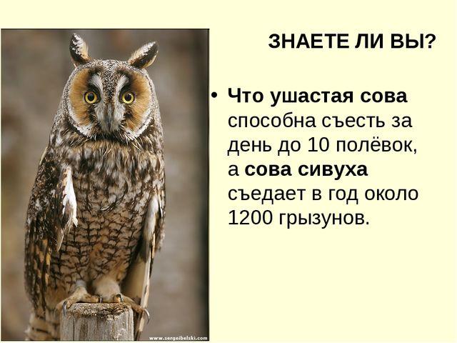 ЗНАЕТЕ ЛИ ВЫ? Что ушастая сова способна съесть за день до 10 полёвок, а сова...