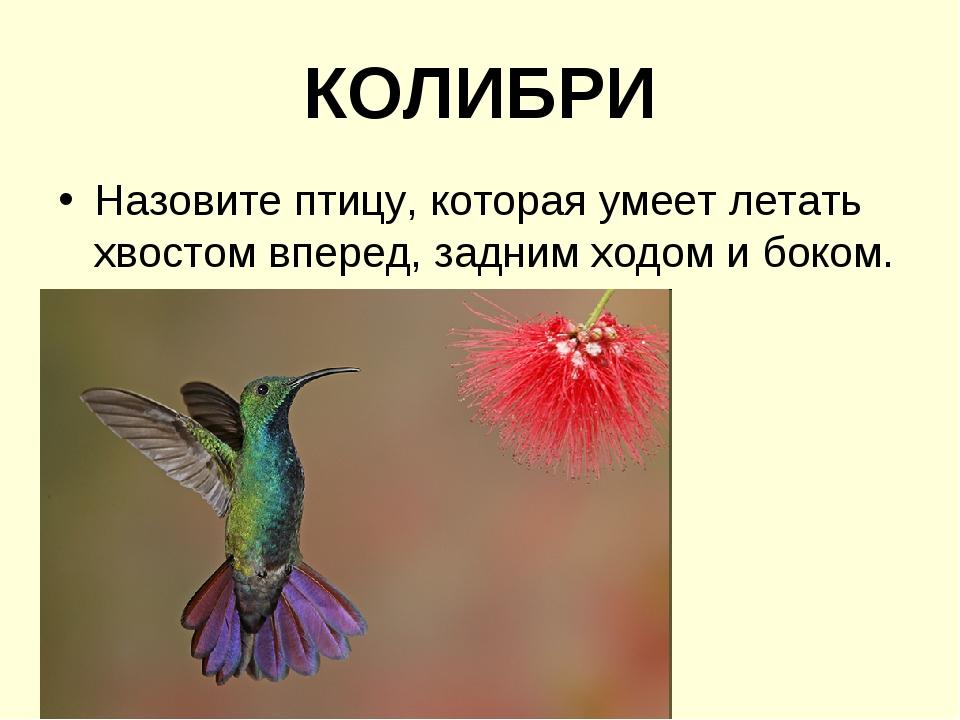 КОЛИБРИ Назовите птицу, которая умеет летать хвостом вперед, задним ходом и б...