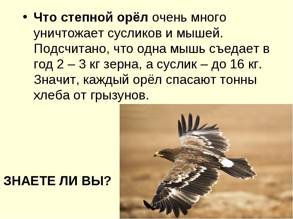 ЗНАЕТЕ ЛИ ВЫ? Что степной орёл очень много уничтожает сусликов и мышей. Подсч...