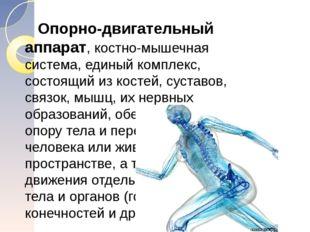 Опорно-двигательный аппарат, костно-мышечная система, единый комплекс, состо