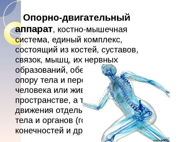 Опорно-двигательный аппарат, костно-мышечная система, единый комплекс, состо...