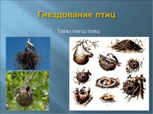 Типы гнезд птиц