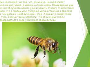 Ученые Индии настаивают на том, что, возможно, на пчел влияет электромагнитно