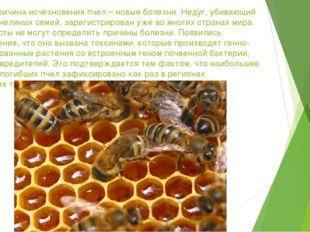 Еще одна причина исчезновения пчел – новые болезни. Недуг, убивающий миллионы