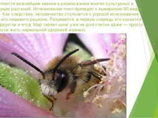 Пчелы являются важнейшим звеном в размножении многих культурных и дикорастущи
