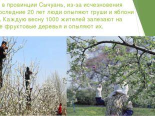 В Китае, в провинции Сычуань, из-за исчезновения пчел в последние 20 лет люди