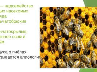 Пчёлы — надсемейство летающих насекомых подотряда Стебельчатобрюхие отряда пе