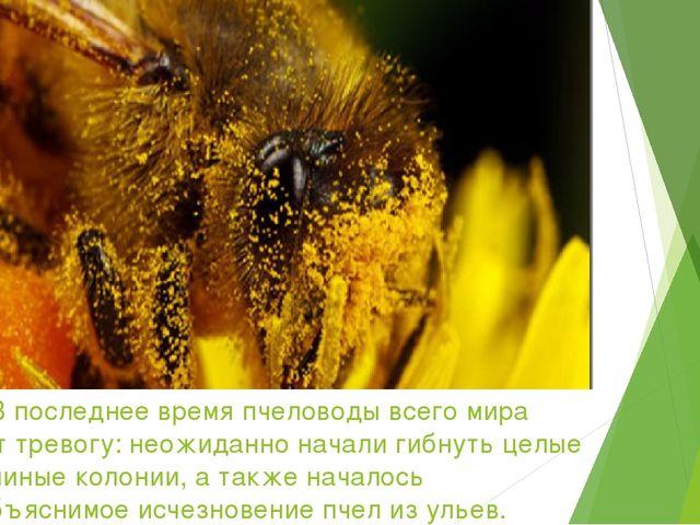 В последнее время пчеловоды всего мира бьют тревогу: неожиданно начали гибну...