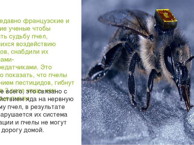 Совсем недавно французские и британские ученые чтобы проследить судьбу пчел,...