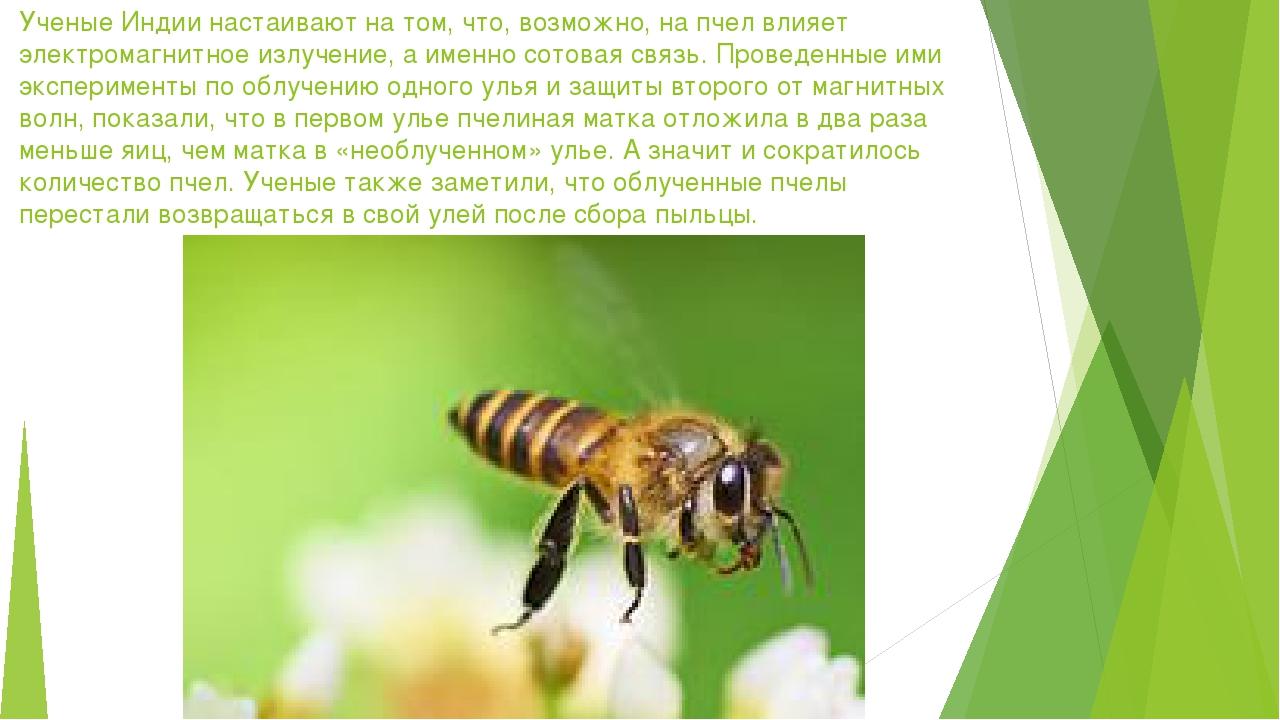 Ученые Индии настаивают на том, что, возможно, на пчел влияет электромагнитно...