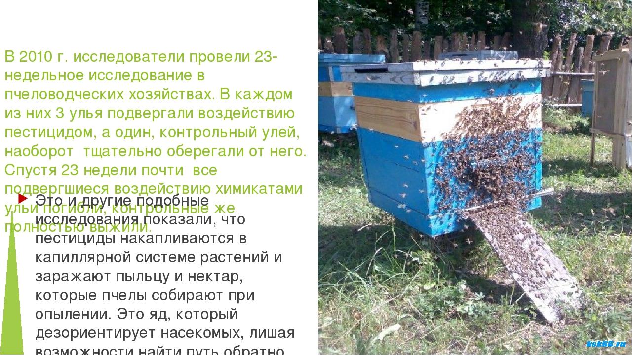 В 2010 г. исследователи провели 23-недельное исследование в пчеловодческих хо...