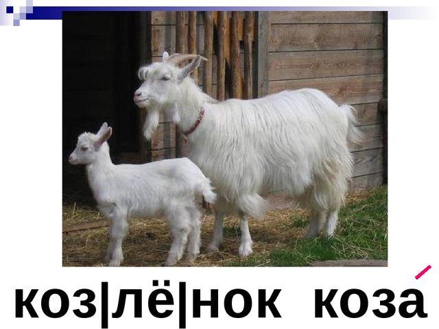 коз лё нок коза