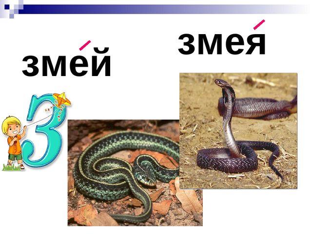 змея змей