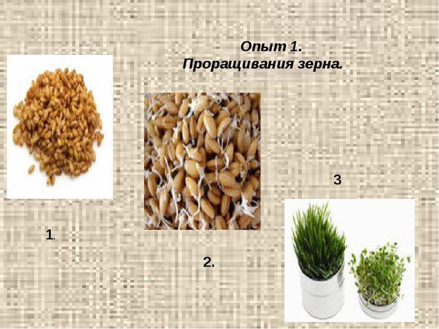 Опыт 1. Проращивания зерна. 1. 2. 3