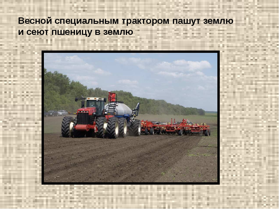 Весной специальным трактором пашут землю и сеют пшеницу в землю