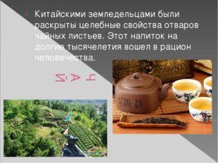 ЧАЙ Китайскими земледельцами были раскрыты целебные свойства отваров чайных л