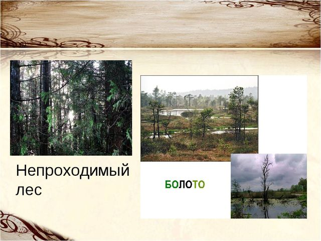 Непроходимый лес