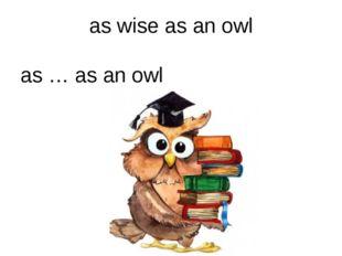 as wise as an owl as … as an owl