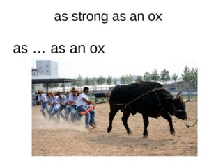 as strong as an ox as … as an ox
