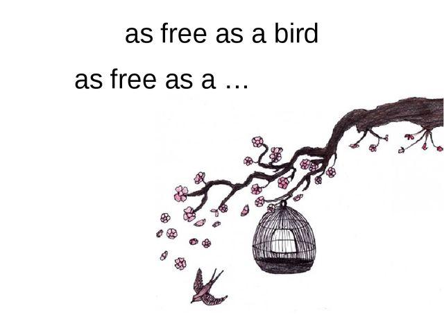 as free as a bird as free as a …